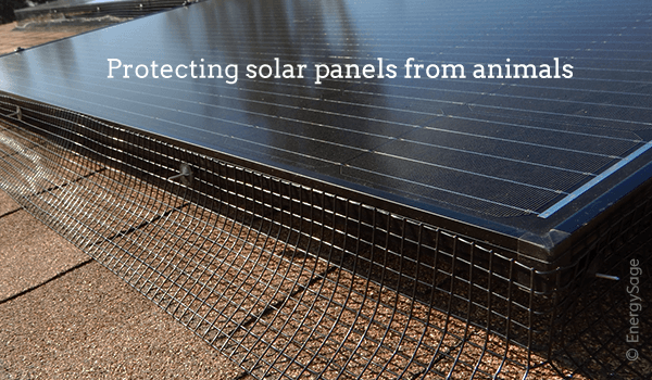 solar panel critter guards squirrels birds